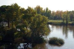 Árboles y arbustos en jardín del lago de Forest Park Imagenes de archivo