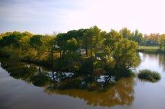 Árboles y arbustos en jardín del lago de Forest Park Foto de archivo