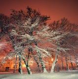Árboles y arbustos en la nieve en un parque en noche del invierno Imagen de archivo