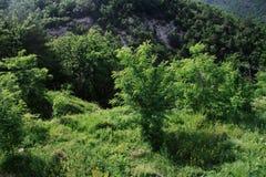 Árboles y arbustos en las montañas Fotos de archivo libres de regalías