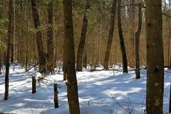 Árboles y arbustos en Rusia central en invierno Una imagen única de la fauna durante la estación fría fotos de archivo libres de regalías