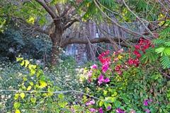 Árboles y arbustos en un parque imagenes de archivo