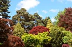 Árboles y arbustos ornamentales con follaje rojo y verde Fotos de archivo
