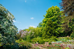 Árboles y arbustos verdes en jardín de la primavera Imagen de archivo