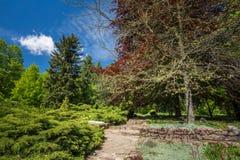 Árboles y arbustos verdes en jardín de la primavera Fotos de archivo