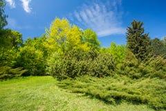 Árboles y arbustos verdes en jardín de la primavera Fotos de archivo libres de regalías