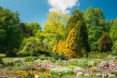 Árboles y arbustos verdes en jardín Diseño del jardín Fotos de archivo libres de regalías