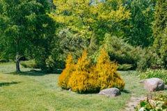 Árboles y arbustos verdes en jardín Diseño del jardín Imagen de archivo libre de regalías
