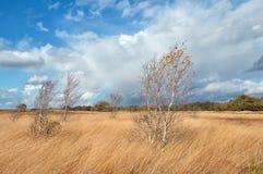 Árboles y arco iris de abedul durante otoño Imagen de archivo libre de regalías