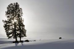 Árboles y bisontes en contraluz Fotografía de archivo