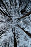 Árboles y bosque Fotos de archivo libres de regalías