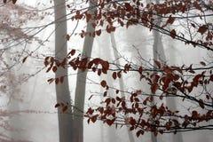 Árboles y bosque Imagenes de archivo