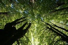 Árboles y bosque Imagen de archivo