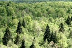 Árboles y bosque Foto de archivo