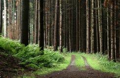 Árboles y bosque Foto de archivo libre de regalías