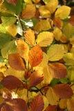 Árboles y bosque Imágenes de archivo libres de regalías