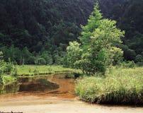 Árboles y bosque Fotografía de archivo libre de regalías