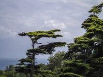 Árboles y bosque africanos Fotografía de archivo libre de regalías