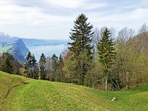 Árboles y bosque mezclado en primavera temprana en las cuestas entre el lago lucerne y el pico de Gersauerstock imagen de archivo libre de regalías