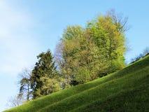 Árboles y bosque mezclado en primavera temprana en las cuestas entre el lago lucerne y el pico de Vitznauerstock fotografía de archivo