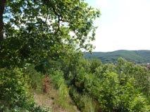 Árboles y bosques Imagenes de archivo