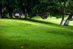 Árboles y césped Fotos de archivo