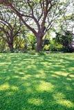 Árboles y césped Imagen de archivo libre de regalías