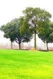 Árboles y césped Foto de archivo libre de regalías