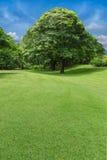 Árboles y césped verde en parque Fotos de archivo