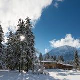 Árboles y cabinas enormes de la madera en invierno Imagen de archivo