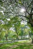 Árboles y calzada en campo de hierba verde imagenes de archivo
