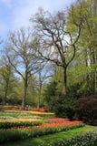 Árboles y camas con los tulipanes en el jardín de flores Keukenhof en primavera fotografía de archivo libre de regalías