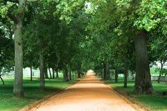 Árboles y camino Imágenes de archivo libres de regalías