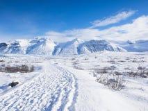 Árboles y camino congelados campo Foto de archivo libre de regalías