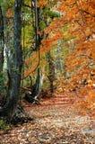 Árboles y camino de la caída Fotografía de archivo
