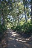 Árboles y camino de tierra en un día de verano caliente Imagenes de archivo