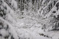 Árboles y camino en bosque mezclado del invierno Foto de archivo libre de regalías