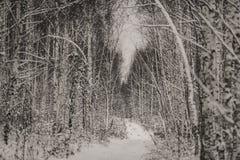 Árboles y camino en bosque mezclado del invierno Imagen de archivo libre de regalías