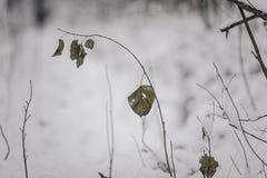 Árboles y camino en bosque mezclado del invierno Foto de archivo