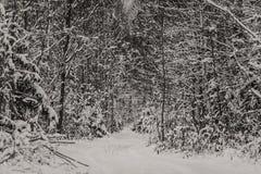 Árboles y camino en bosque mezclado del invierno Imagen de archivo