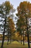 Árboles y caminos Imagen de archivo