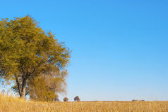Árboles y campo en la pradera imagen de archivo
