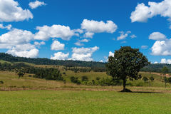 Árboles y campo verde Fotos de archivo libres de regalías