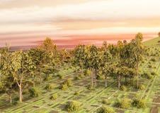 Árboles y campos Foto de archivo libre de regalías