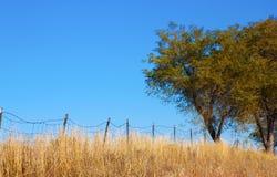 Árboles y cerca de alambre vieja fotografía de archivo libre de regalías
