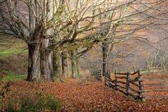 Árboles y cerca del otoño fotos de archivo
