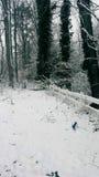 Árboles y cerca Nevado Imagen de archivo