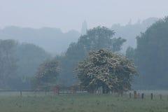 Árboles y cercas 2 Fotografía de archivo libre de regalías