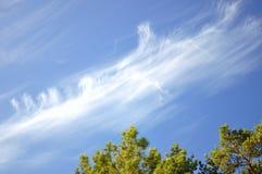 Árboles y cielo Foto de archivo libre de regalías