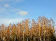 Árboles y cielo Imágenes de archivo libres de regalías